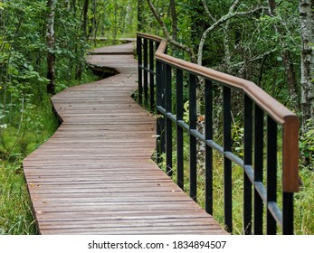 Wooden decking on an ecological path in the forest. Nature Reserve Of Saint-Petersburg.