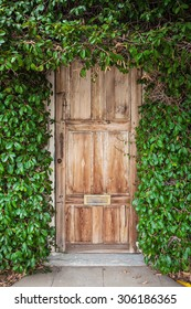 Wooden door with green leaves. Green leaf wall and old wood.