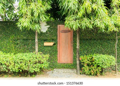 Wooden door on wall with ivy