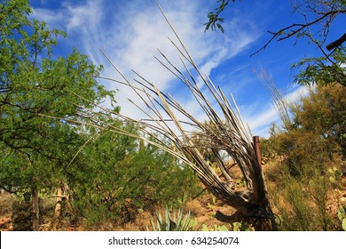 Wooden dried out skeleton ribs of a dead saguaro cactus against a blue sky in Colossal Cave Mountain Park in Vail, Arizona, USA near Tucson.