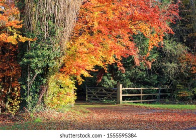 Wooden Driveway Gate And Fence Surrounded By Autumn Coloured Foliage.