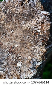 Wooden dry sliver firewood. Dried bark of wood texture, background nature raw, dead dry tree