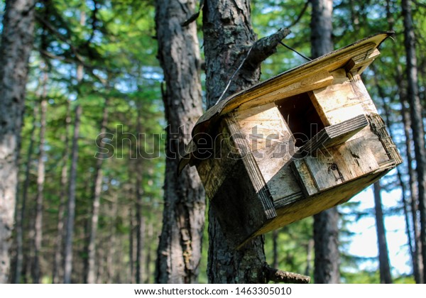 Wooden Feeder Hanging Tree Hand Made Stock Photo Edit Now 1463305010
