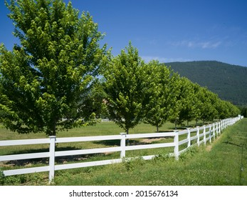 Wooden fence in field, East Kootenay, British Columbia, Canada - Shutterstock ID 2015676134