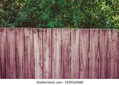 a wooden fence in the garden, behind an apple tree with green apples and their branches hanging down