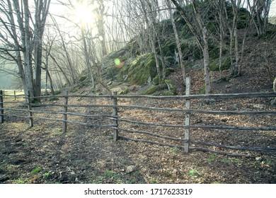 wooden fence near forest under autumn