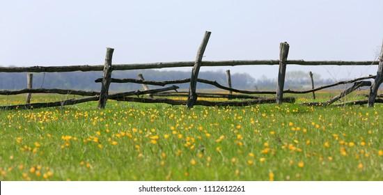 wooden fence on flowers meadow