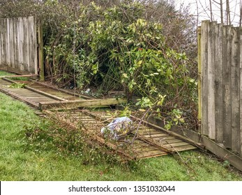 Wooden fence panels blown down by the strong winds of a storm