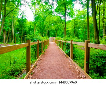 wooden fence path in forest park with tall pine trees and green plants and foliage, walking towards a goal, perserverance