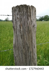 Wooden fence post with barbed wire in front of a green meadow in neutral light