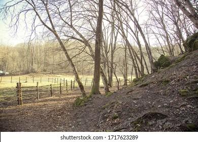 wooden fences near forest in autumn sun