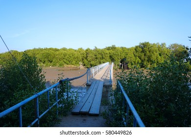 Wooden foot bridge over the river and mangrove forest
