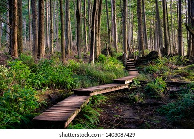 A wooden foot path through the wooded forest of Cape Flattery in Olympic National Park, Washington.