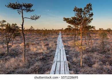 Wooden footbridge in Dunika bog, Latvia.