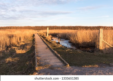 Wooden footbridge into the reeds in a wetland at the swedish island Oland