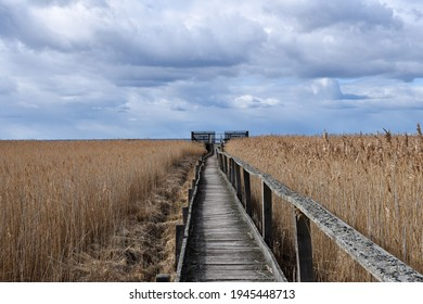 Wooden footbridge leading to a platform in the reeds on the island Oland in Sweden