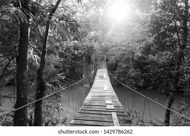 Wooden footbridge over river in tranquil forest in stunning black and white