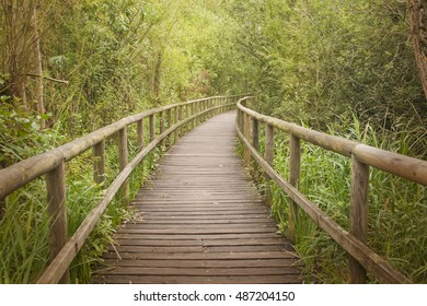 Wooden footbridge passing through a bamboo forest