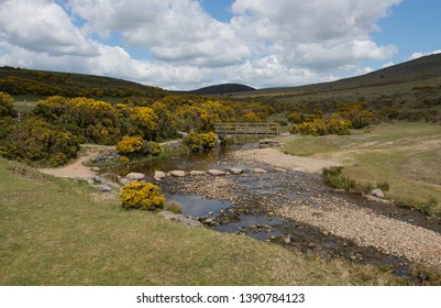 Wooden Footbridge and Stepping Stones Surrounded by Gorse (Ulex europaeus) on the River Lyd within Dartmoor National Park in Rural Devon, England, UK