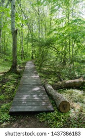 Wooden footpath in a deciduous forest with fresh green leaves in the swedish nature reserve Halltorps Hage at the island Oland