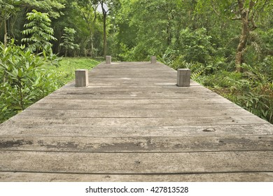 Wooden footpath into jungle