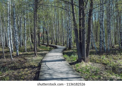 wooden footpath in swamp with beautiful evening sun light in green foliage of summer bog. wooden boardwalk in perspective view