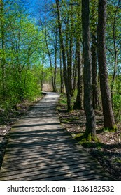 wooden footpath in swamp with beautiful evening sun light in green foliage of summer bog. boardwalk in perspective view - vertical, mobile device ready image