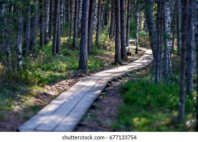 wooden footpath in swamp with beautiful evening sun light in green foliage of summer bog. perspective view