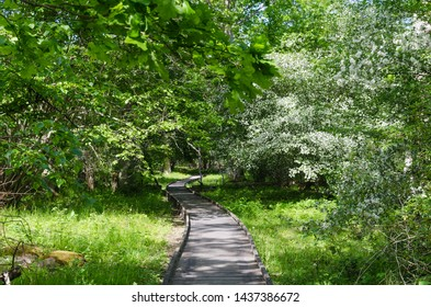 Wooden footpath in the swedish nature reserve Halltorps Hage at the island Oland