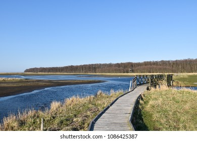 Wooden footpath through the wetland Beijershamn on the swedish island Oland - a famous birding site