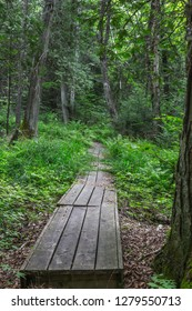 A wooden footpath through the woods is slowly overgrown by ferns and grasses, giving the illusion that the path disappears into thick bush.