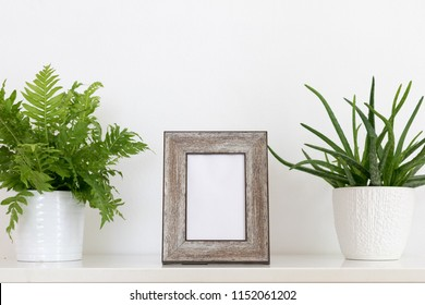 wooden frame with ferns and aloe vera