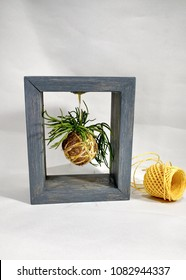 The wooden frame with hanging mini kokedama planted with succulent