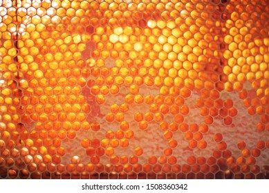 Wooden frame with honeycomb full of honey. Close up background for design. Macro. Honey beehive.