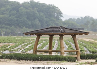 wooden gazebo in the woods intended for outdoor recreation. Wonderful nature. in korea