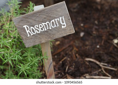 Wooden hand written sign next to Rosemary herb.