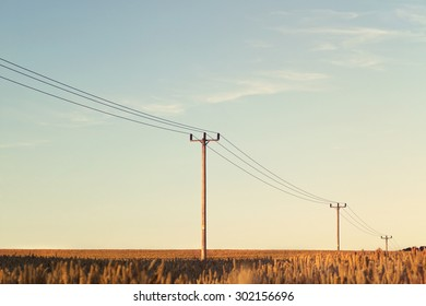 Wooden High Voltage Posts in the MIddle of Wheat Field on Clear Sky