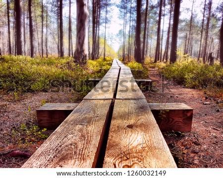 wooden-hiking-trail-pathway-through-450w