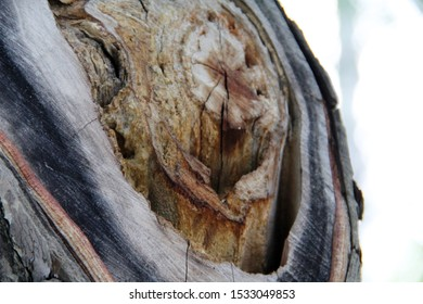 Wooden hollow core texture close up