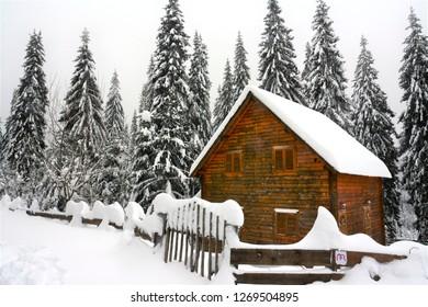 wooden house between fir trees in winter