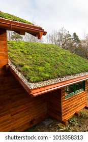 Wooden house with extensive green ecological living sod roof covered with vegetation mostly sedum sexangulare, also known as tasteless stonecrop