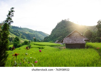 Wooden house made roof from dry leave with rice field in countryside with mountain background