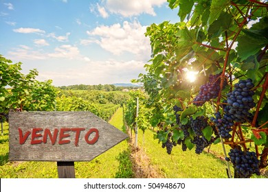 Wooden information sign for the wine region Veneto in Italy, Red wine: Grape vines in the vineyard before harvest, VENETO: Italian wine growing area named Venetia