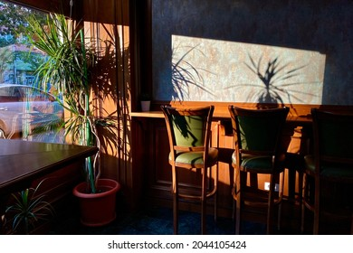 Wooden interior with high green stools at a bar counter and plants shadowing the large window light.
