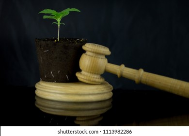 Wooden judge hammer with sound block on the black mirror background - Legality of medical cannabis, legal and illegal growing cannabis plants on the world.