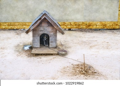 Wooden kennel with  a black dog bound to the chain.