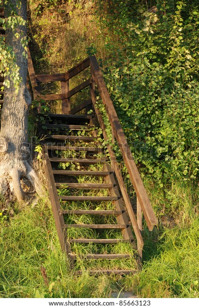 Wooden ladder in the park