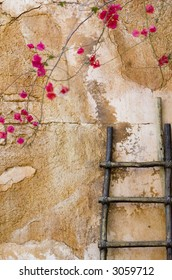 A wooden ladder rests against a wall with red flowers in the foreground