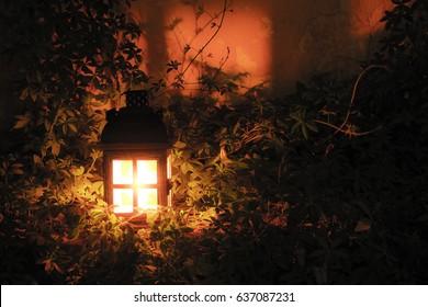 wooden lantern on plants