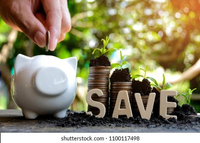 Wooden letter Blocks writing word SAVE and piggy bank, Money growth in soil . While seedlings are growing on pile of coins - Concept finance investment.